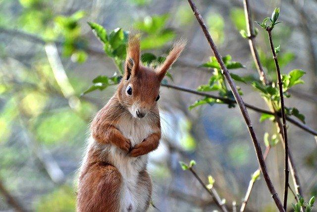 木の上でしょんぼりするリス